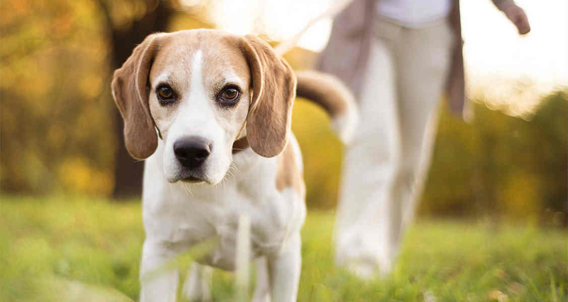 How to Treat the Different Types of Allergies in Dogs and Cats