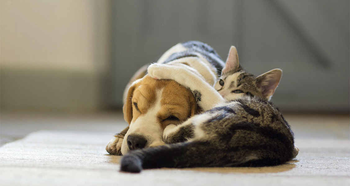 Top 5 Home Remedies for Hot Spots on Cats and Dogs