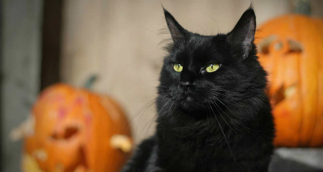 5 Tips for a Safe Halloween With Your Pets
