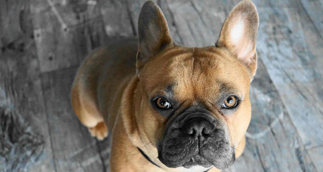 5 Things to Consider Before Buying a Purebred Dog or Cat