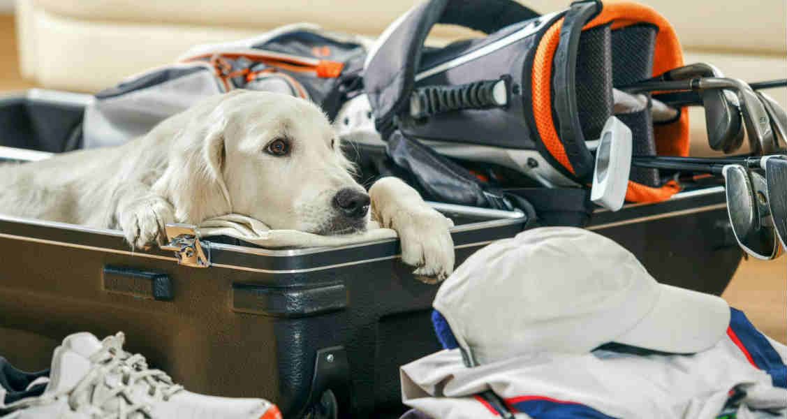 5 Things to Consider Before Traveling With Your Dog