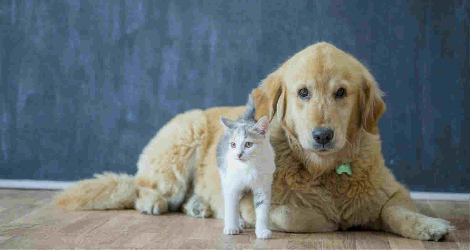 Heartworm Prevention for Cats and Dogs: What You Need to Know