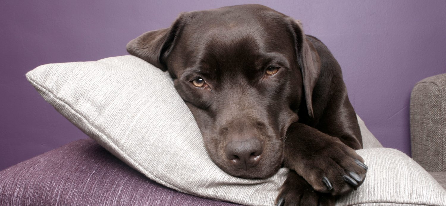 What causes blood in the urine of dogs and how is it treated?