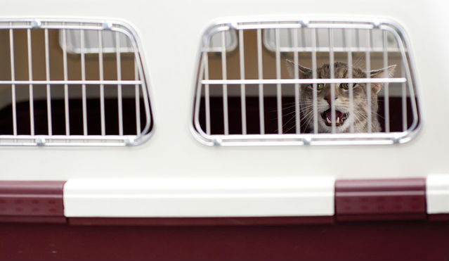 Is Gabapentin for cats anxiety a good idea for air travel?
