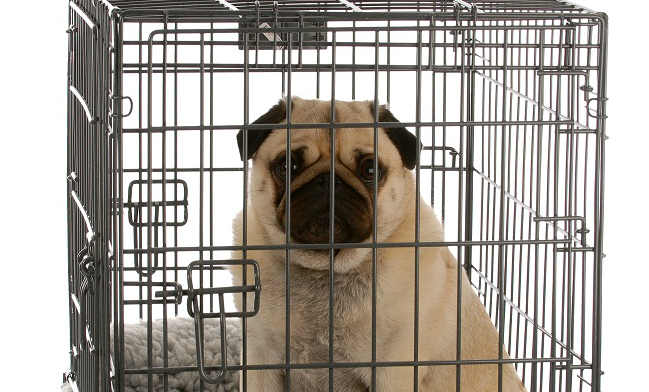 What are some tips on how to prepare your dog for a flight in cargo?