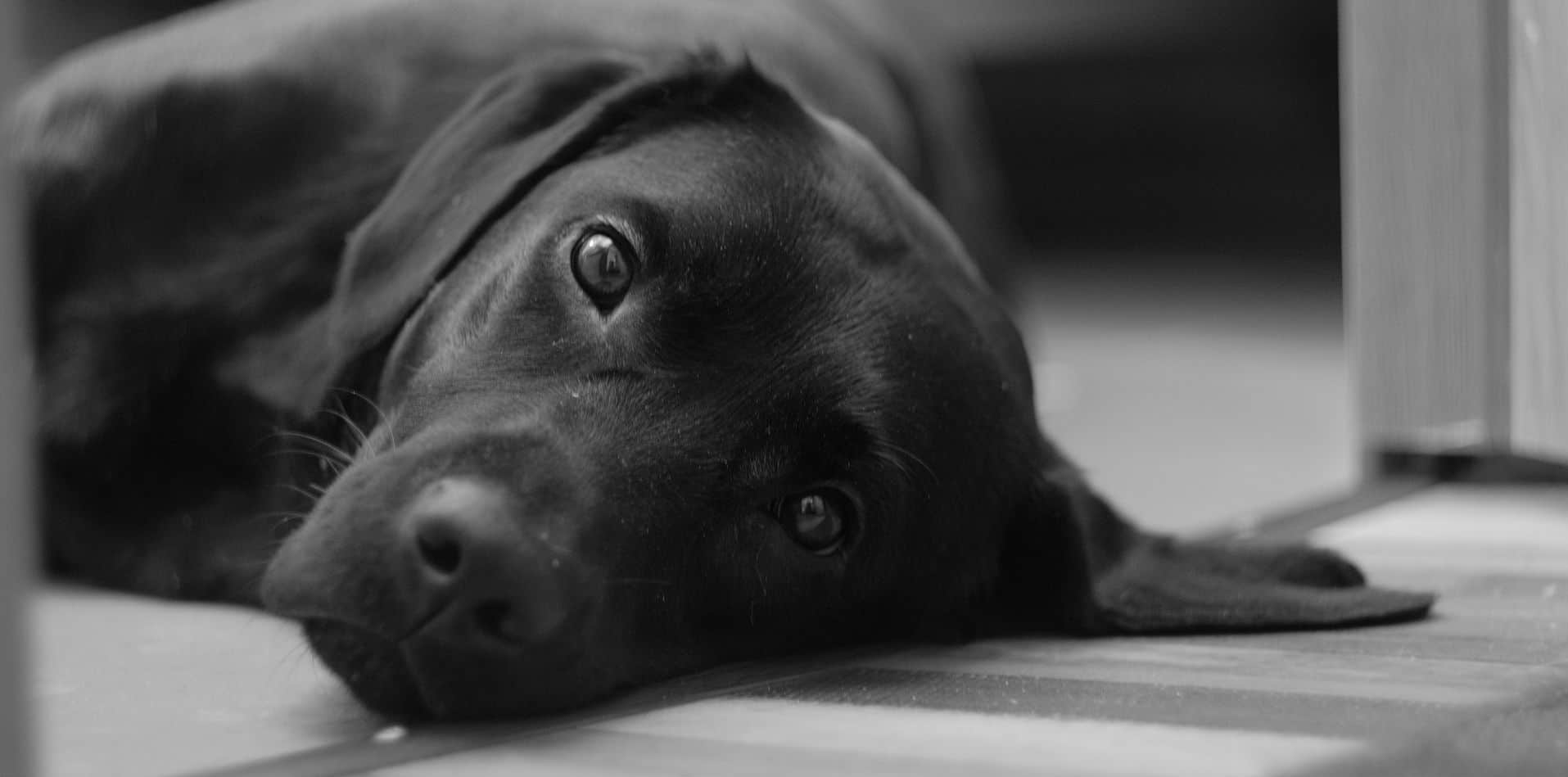 What are some natural remedies for anxiety in dogs?