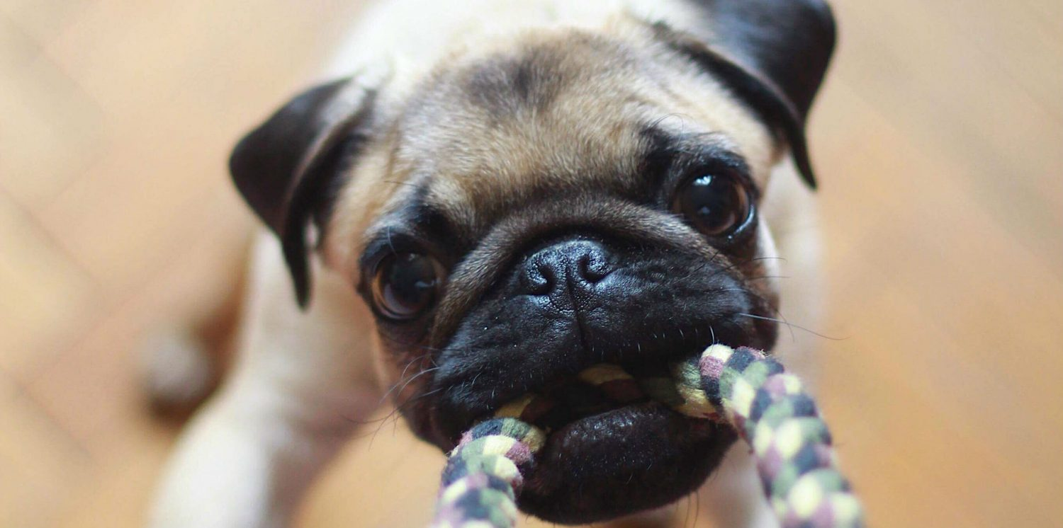 How can we stop our puppy from chewing on household items?