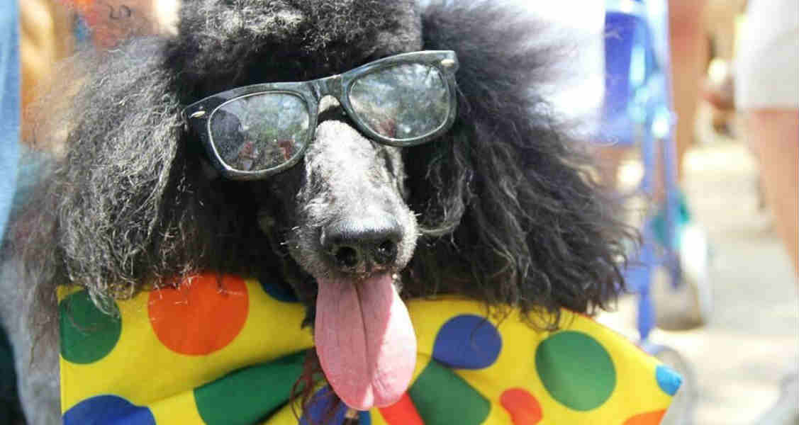 6 Tips for Keeping Pets Cool and Safe in Summer
