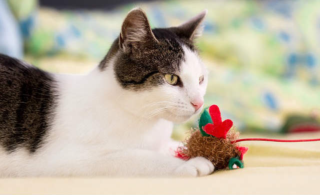 What are some strategies to manage pica in cats?