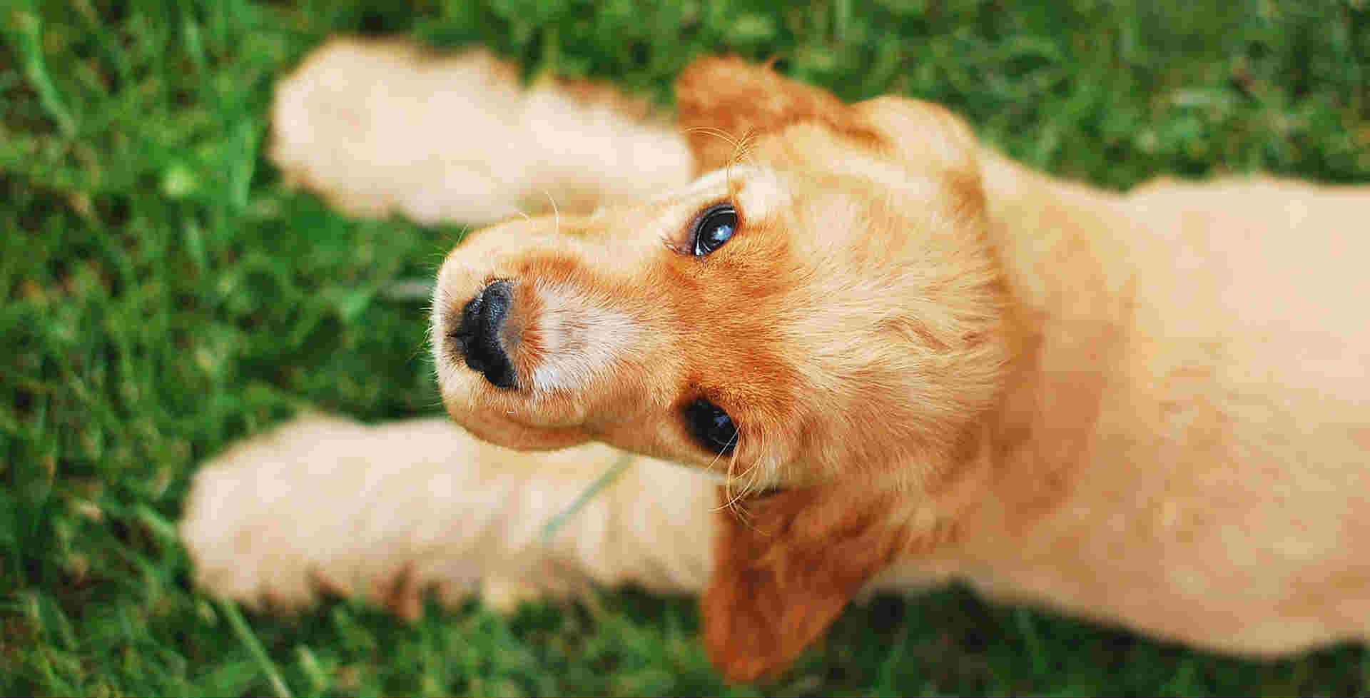 What can you give a dog who is allergic to grass?