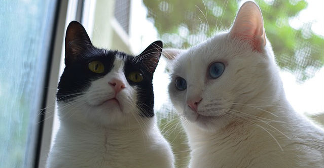 What are some tips for introducing a new cat to other cats?