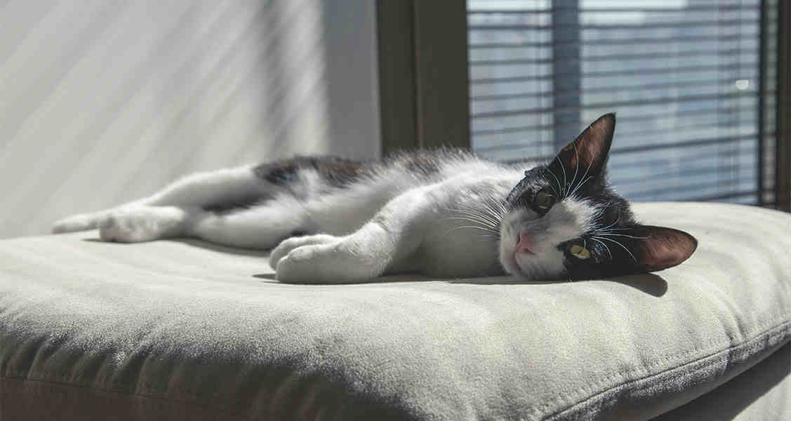 9 Signs That Your Cat May Be Sick