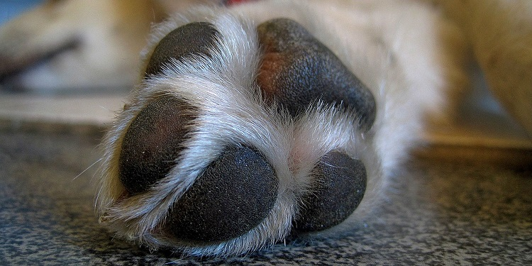 How can we get our dog to stop licking its paws all of the time and what could be the cause?