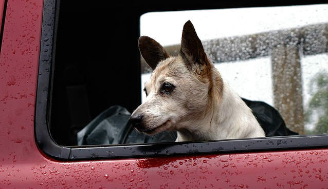 What are some tips on how to calm a dog in the car?