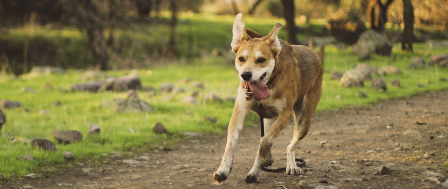 At what age can a puppy start going for jogs?