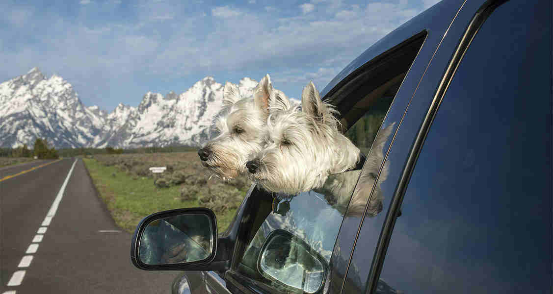 How to Keep Your Dog Safe on the Road