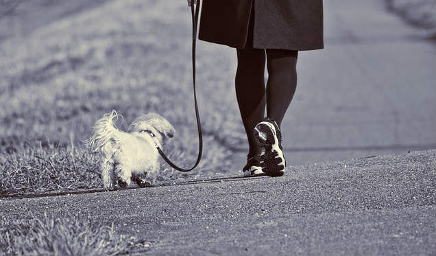 How far and how often can you walk a dog with a heart murmur?