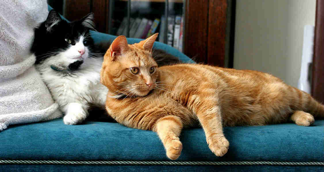 7 Common Cat Behavior Problems and How to Fix Them