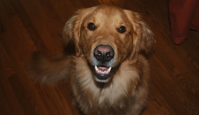 What oral hygiene rinse for dogs is recommended?