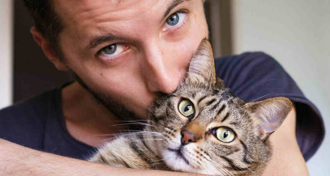 6 Dangers Cats Face Outdoors