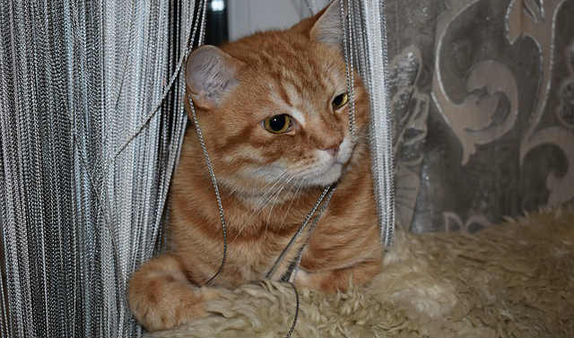 What are some ways of how to stop cats from chewing cords?