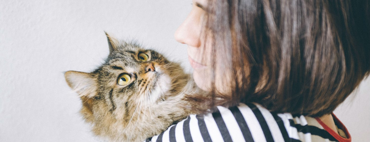 Can humans transmit feline gastroenteritis germs from clothes and infect a cat?