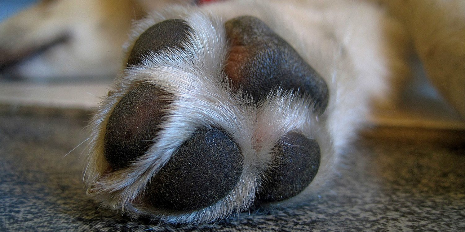 Why does my dog have soreness between its paws?