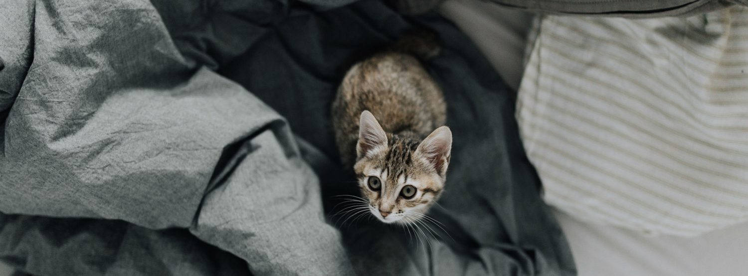 Is there a way to reduce the signs and symptoms of feline herpesvirus and is it contagious to humans and other pets?