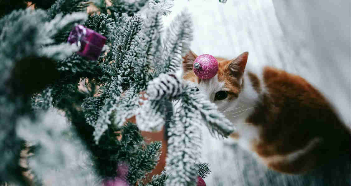 Poisonous Holiday Plants to Cats and Dogs
