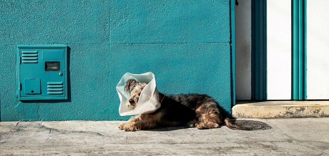 What are some of the benefits to hysterectomies in dogs?
