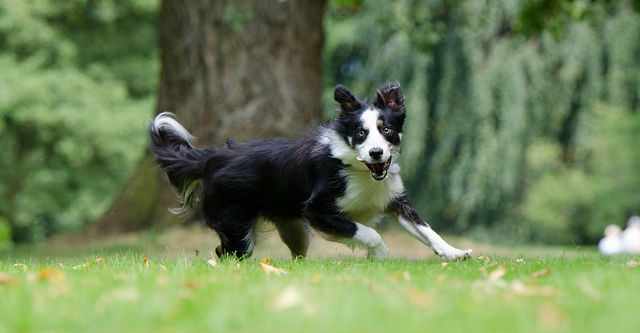 Does neutering a dog calm them down? Why does my dog run away?