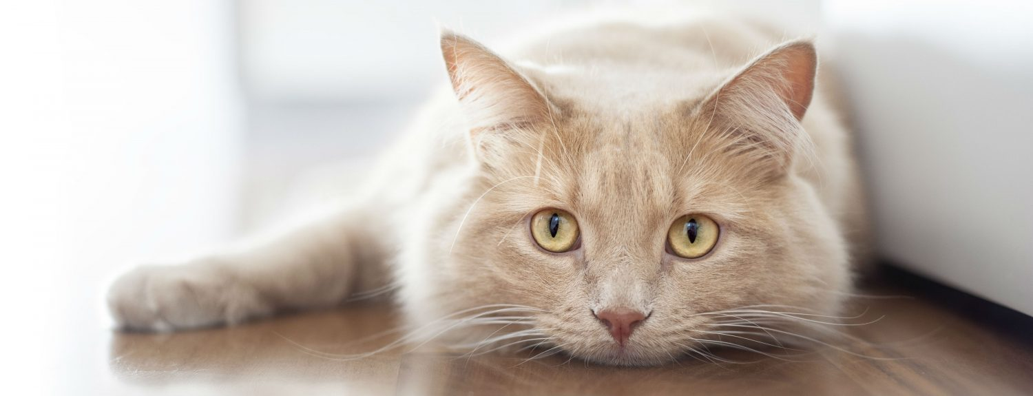 What can I do to improve my cat's kidney disease?