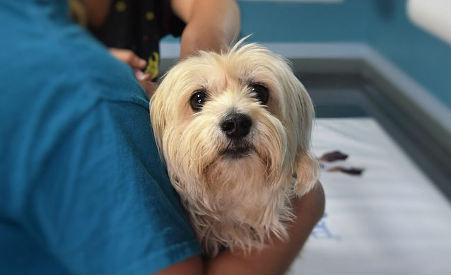 Is it necessary to remove benign tumors in dogs?