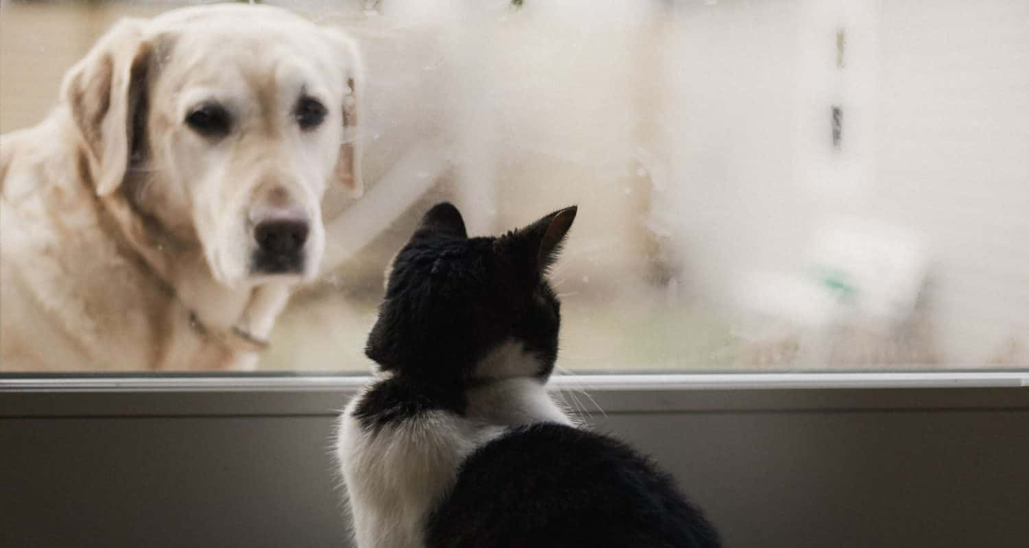 What are some tips on how to stop dog aggression towards cats?