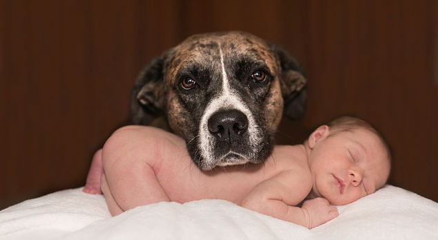 What are some tips on how to introduce your dog to a new baby?