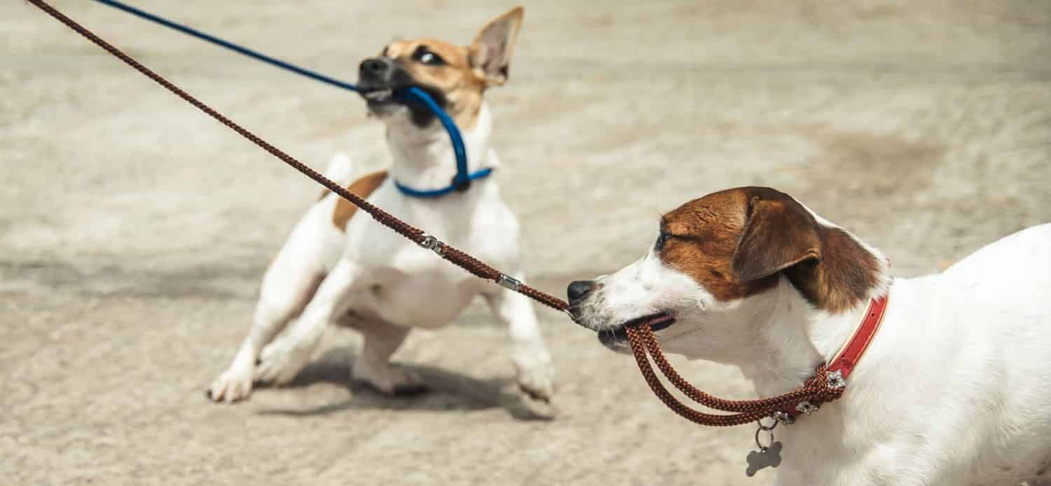 What are some tips on how to stop your dog from pulling on the leash?
