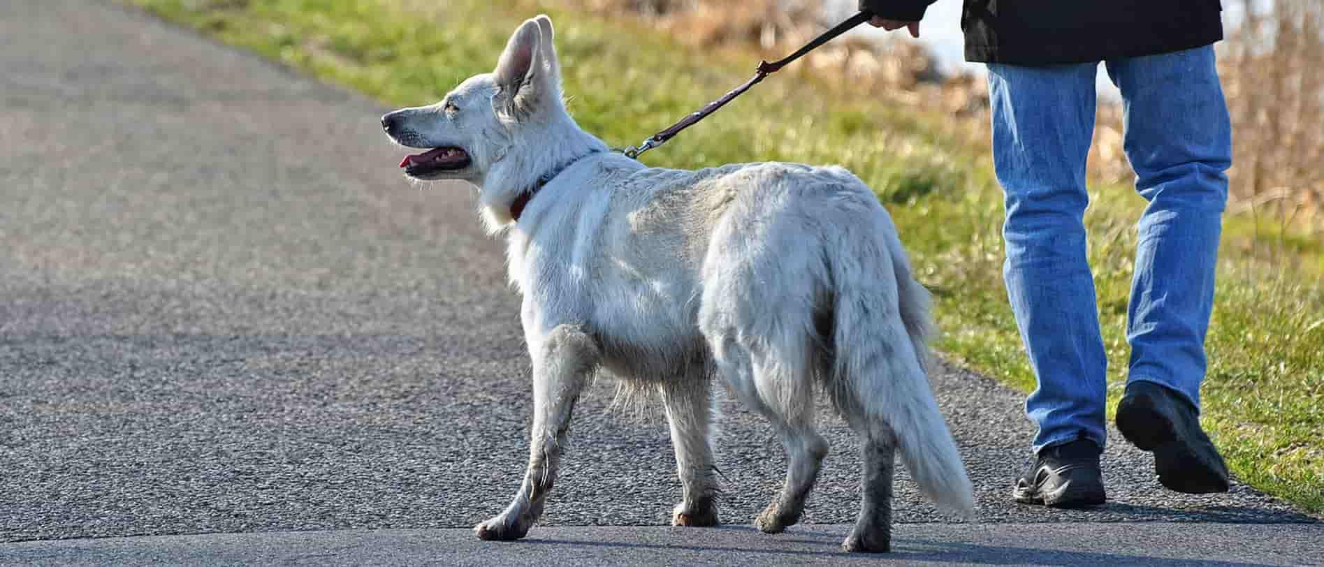 How can I help my dog with arthritis?