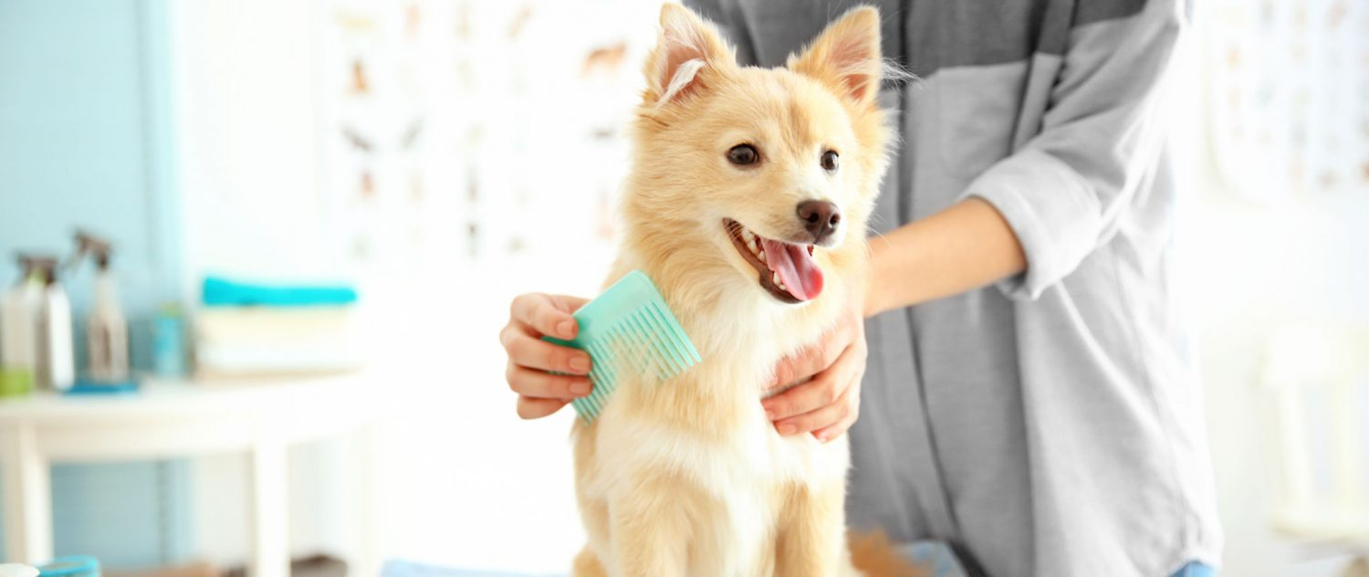 How do you get rid of a dog's tear stains?