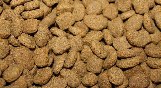 What are some tips on switching a dog's food?