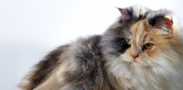 How can I get my cat to lose weight? Is exercise or diet more important?
