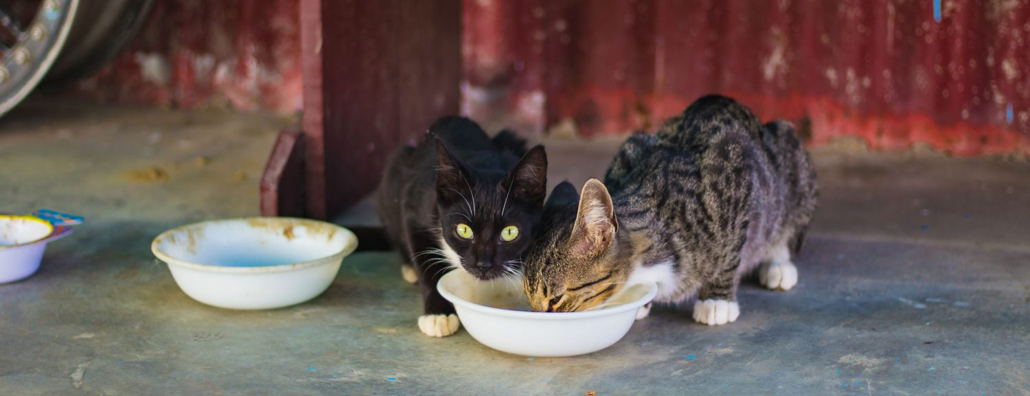 What are some resources that provide free or low-cost spaying, neutering and vaccinations for kittens?