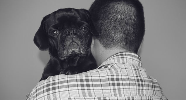 What are some tips on how to solve separation anxiety in dogs?