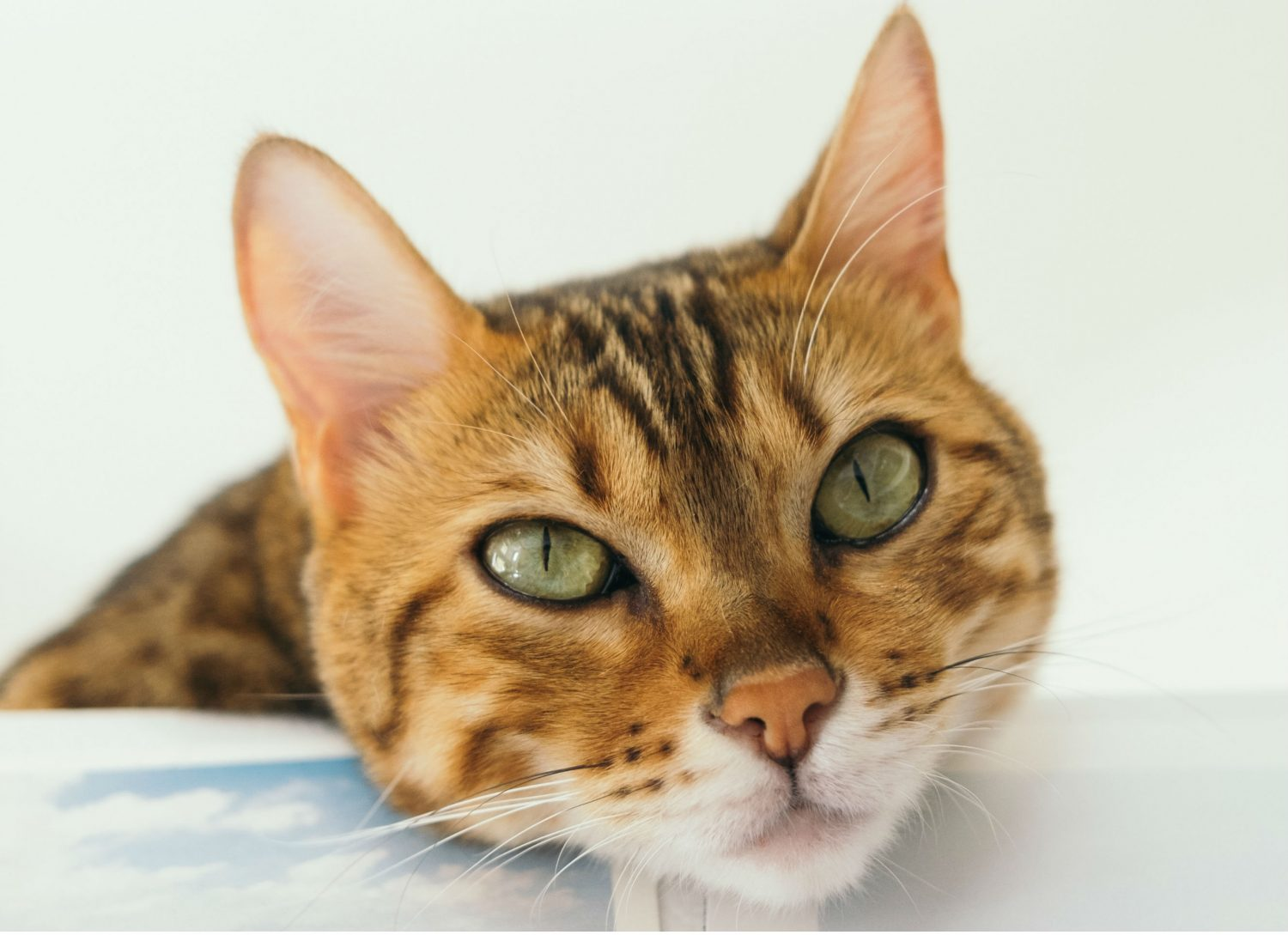 Is sneezing and watery eyes a sign that a cat has allergies and what kind of medication could be given?