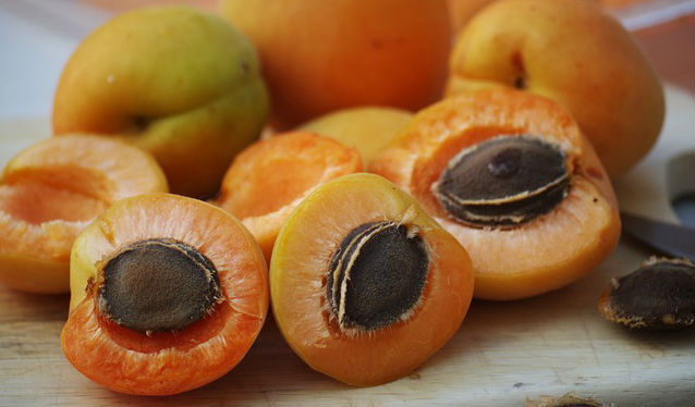 Can dogs eat apricot seeds? Can they be used to treat mast cell tumors in dogs?