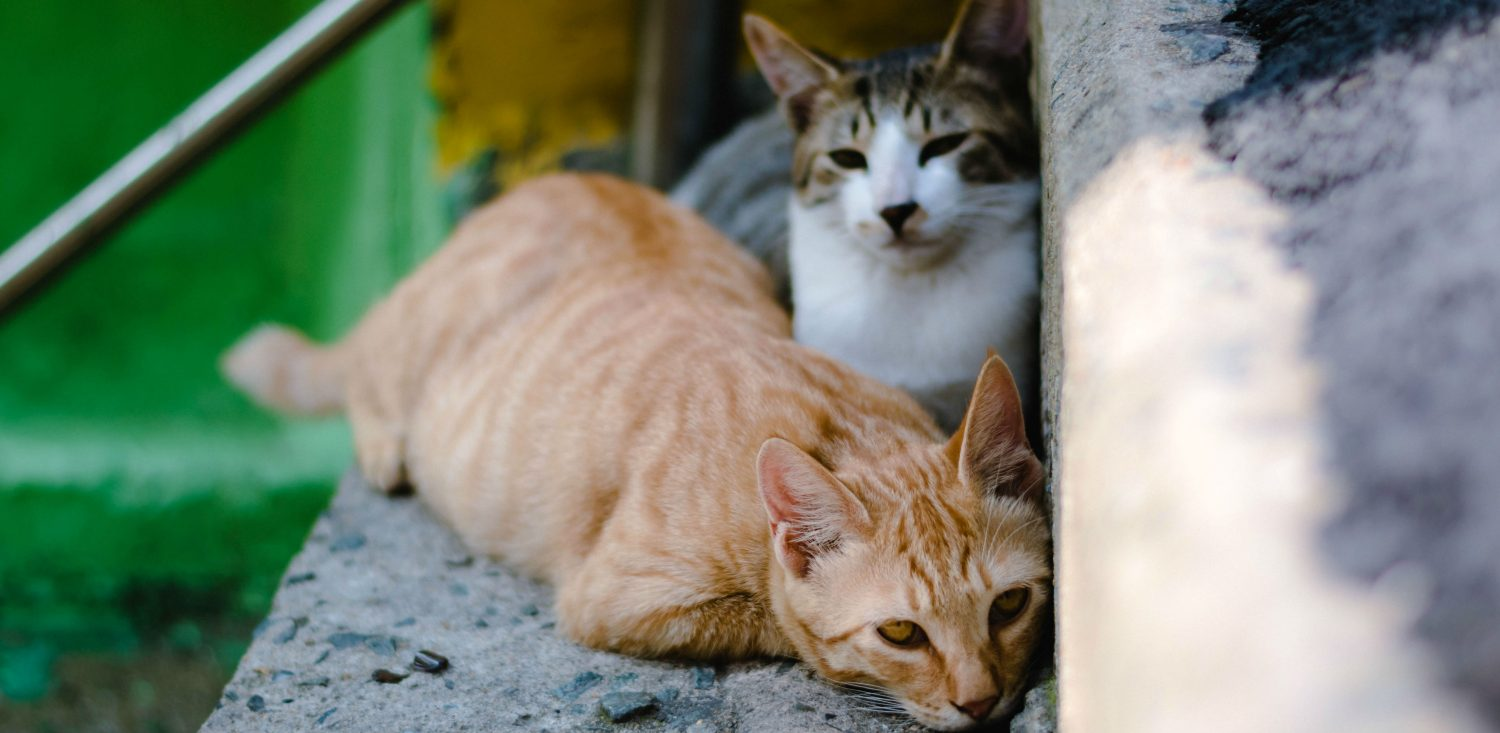Is it possible that my two cats contracted the same fatal virus that took my other cat's life?