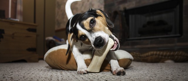 Are antlers safe for dogs?