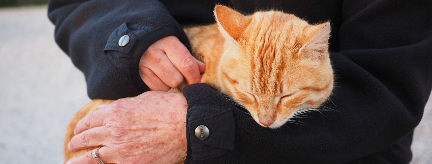 How do I know when it is time to say goodbye to my cat that is suffering from kidney disease and what are some treatments to consider?
