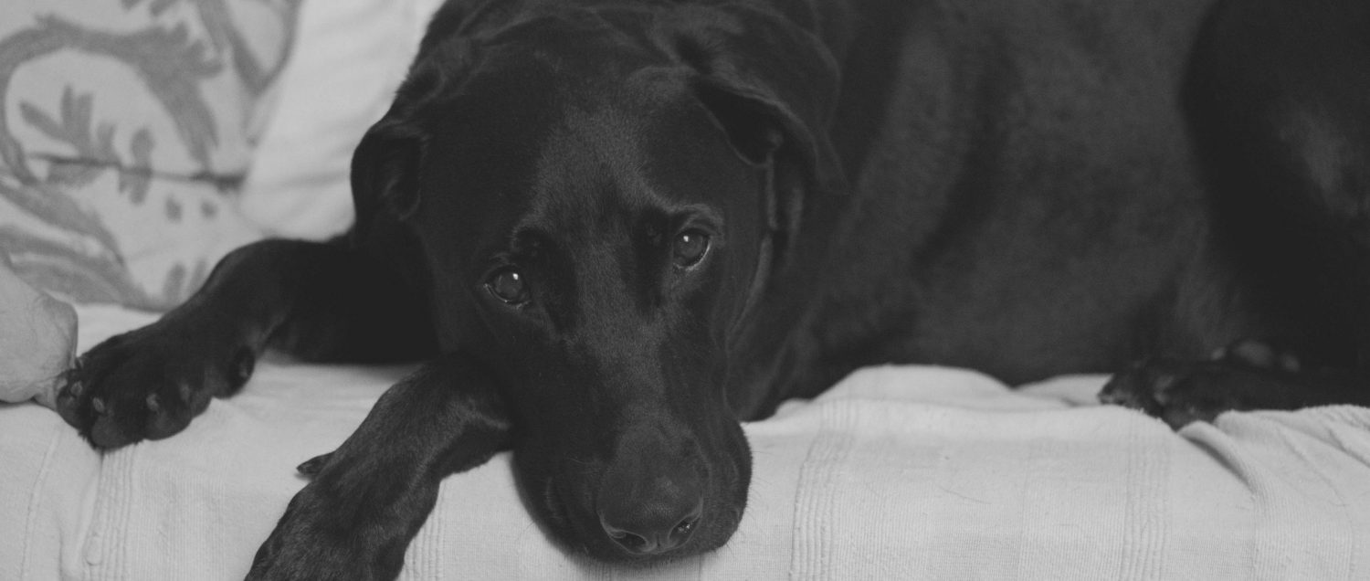 What can I do to improve my elderly dog's quality of life and sleep? He's showing signs of dementia.