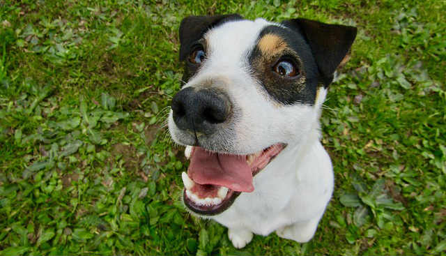 Is a teeth cleaning in dogs necessary?
