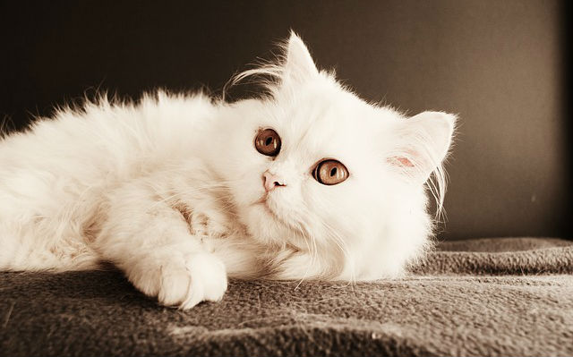 Is it safe to use human eye drops for cats?